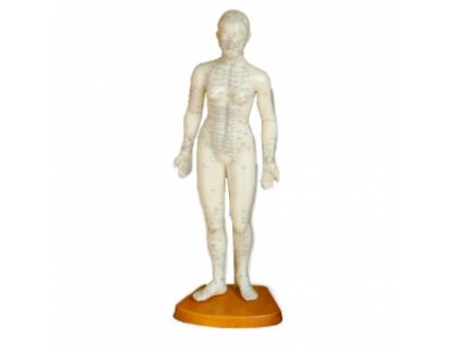Модель для акупунктуры - Женщина (50см)